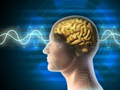 Gehirn und Psyche- der Einfluss der Gedanken auf die Gesundheit