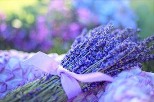 Young-Living-Lavendel-Aromatherapie-Koblenz-Ätherische-Öle-Koblenz
